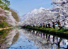 弘前公園の桜並木と岩木山(イメージ)(写真AC/shirakami730)