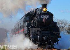 「SLもおか」で運行している真岡鐵道の蒸気機関車C12形66号機(実生の桃/写真AC)